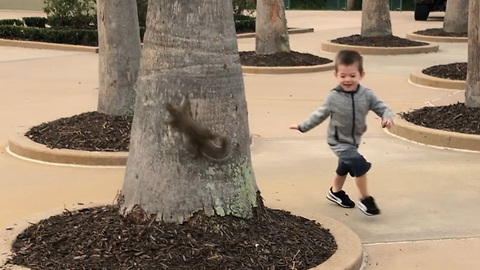 Little boy plays hide and seek with squirrel in Disney World