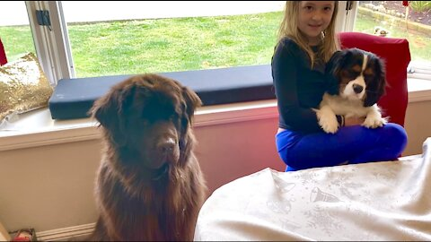 Big doggy and little puppy get tasty Christmas treats
