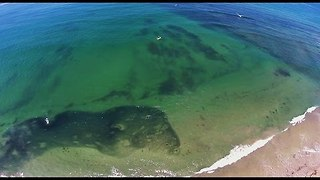 Millions of Sardines Cloud the Shores Off San Diego Coast - Video