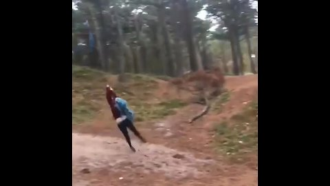 Forest tire swing ends in epic fail
