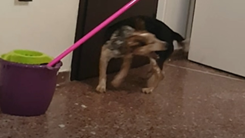 Dog chasing her own tail. Priceless!