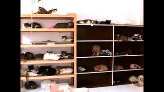 Chinese Cat Lover Saves 1,200 Cats