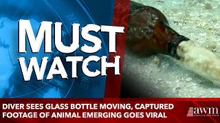 Diver Sees Glass Bottle Moving, Captured Footage Of Animal Emerging Goes Viral - Video