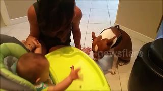 Dog 'sings' peek-a-boo to baby - Video