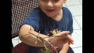 A Three-Year-Old and His Giant Stick Bug - Video