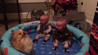 Twin Babies Laughter is CONTAGIOUS