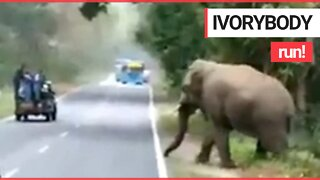 Moment rogue elephant emerges from bushes and charges towards screaming tourists