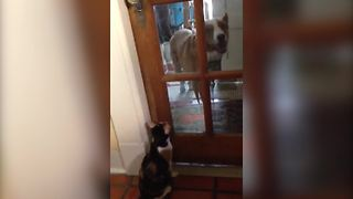 """Bossy Cat Won't Let Dog Inside"""
