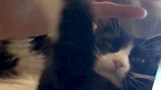 Dozing Cat Uses Owner's Hand To Block Out Light - Video