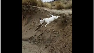 Dog completely wipes out after 10 foot jump - Video