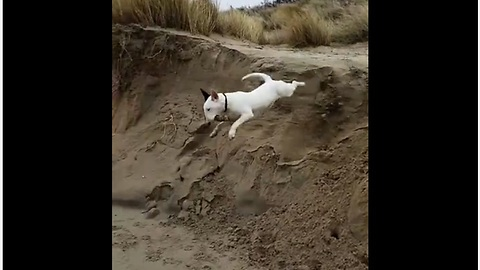 Dog completely wipes out after 10 foot jump