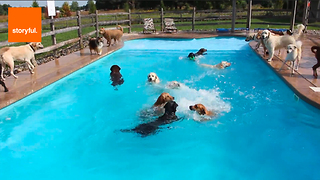Swimming 101...With Dogs - Video