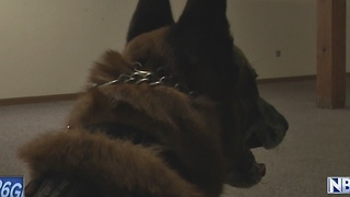 Training, community engagement sets Green Bay K9 Unit apart - Video