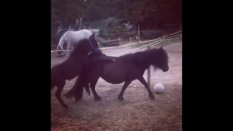 3-month-old mule attempts piggyback ride from his mom