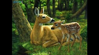 What do deer do with her baby after birth