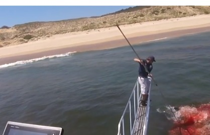 Great White Shark's Seal Hunt Makes for Dramatic Scene Off Cape Cod