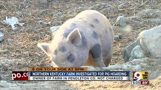 Northern Kentucky farm investigated for pig hoarding