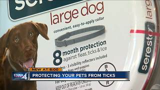 Protect your pets from ticks - Video