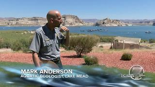Take a 1,450 mile journey along the Colorado River - Video