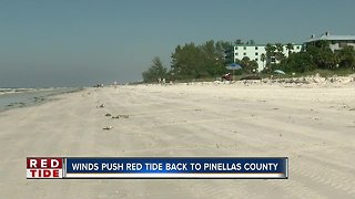 More dead fish reported along Pinellas County beaches
