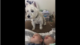 Twin Babies Are Absolutely Fascinated By Their Dog - Video