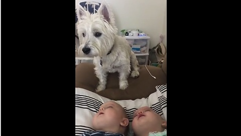 Twin Babies Are Absolutely Fascinated By Their Dog
