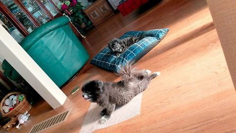 Adorable footage shows pooch bursting bubble wrap with his stomach