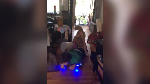 An Awesome Dog Jimping On Hoverboard With His Pal