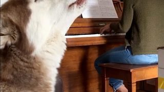 Hilarious Footage Shows Dog Singing Along To Owner's Piano Playing  - Video