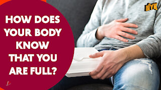 How Does Your Body Knows That's You're Full *