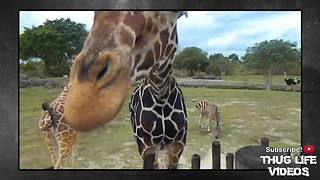 Animals Being Jerks #5 - Video