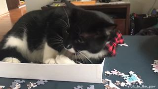 "Cat ""helps"" owner with 1,000 piece jigsaw puzzle"