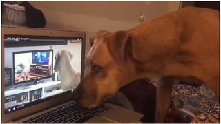 Dog Howls To Video Of Dogs Howling To Videos