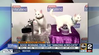 These cats know how to say good morning Maryland! - Video