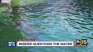 Dolphinaris insider questions water quality after dolphin death