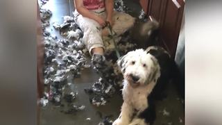 Dog Grooming At Home Can Be A Messy Job