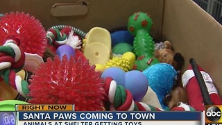 Dogs, cats at shelter get toys for Christmas - Video