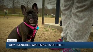 Why thieves are targeting French Bulldogs