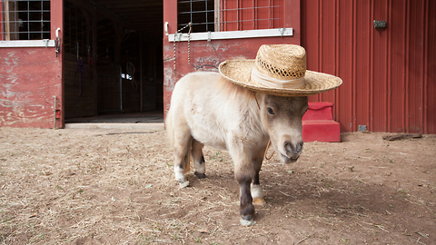 This Tiny Horse Is Becoming An Internet Sensation