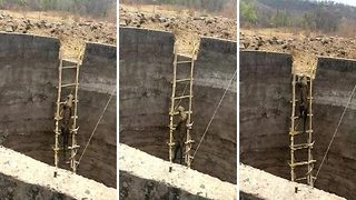 Dramatic moment villagers rescue leopard from well using ladder  - Video