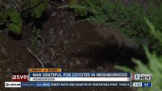 Man grateful for coyotes in neighborhood - Video