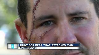 Bear that attacked man still on the run - Video