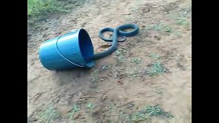Tense video shows release of 2.4-metre black mamba snake - Video