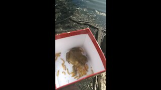 Returning sana the toad to his home
