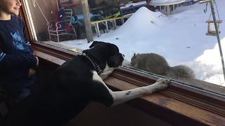 Funny Dog Tries To Get A Squirrel - Video