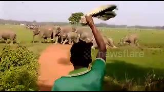 Panicking villagers try to shoo away massive herd of 150 elephants - Video