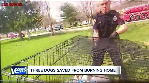 VIDEO: Deputies, firefighters rescue and revive 3 beloved family dogs from burning home