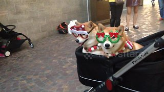 Christmas dogs attract their own little paparazzi as holiday shoppers crowd around for pictures