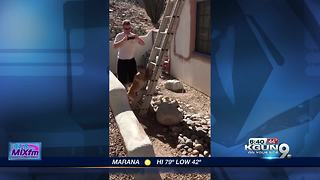 Dog climbs ladder - Video