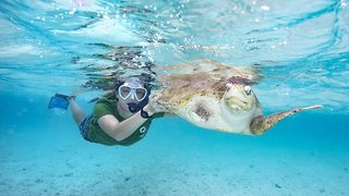 Turtle-Y Awesome! Dream Come True For Young Vet After Landing Job Of A Lifetime Running Turtle Hospital On Paradise Island